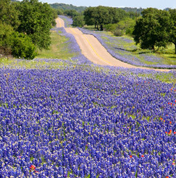 America's Best Spring Drives | Paupers Without Travel | Scoop.it