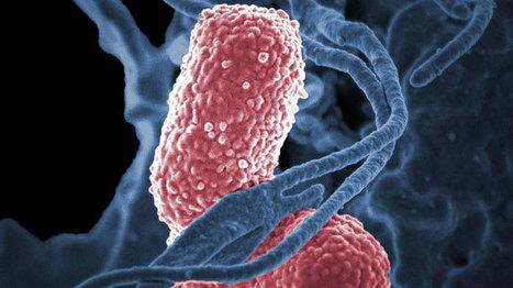 Une américaine décède à cause d'une bactérie résistante à 26 antibiotiques: les infections courantes vont-elles recommencer à tuer? | + de sciences | Scoop.it