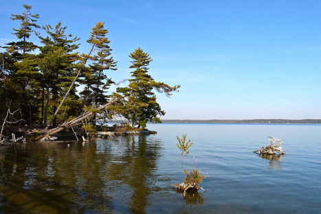 Algal blooms causing concern in northern lakes | Sustain Our Earth | Scoop.it