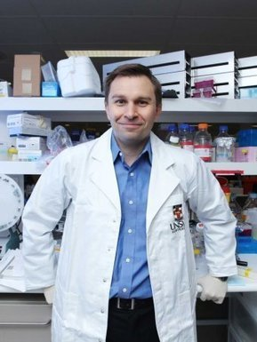 Scientists reverse ageing process in mice | Misc technology watch | Scoop.it