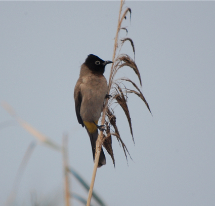 Bike Birding In Israel At Agamon Hula : Birdchick | Birds and Birding | Scoop.it