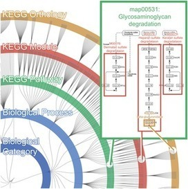 FuncTree: Functional Analysis and Visualization for Large-Scale Omics Data | Databases & Softwares | Scoop.it