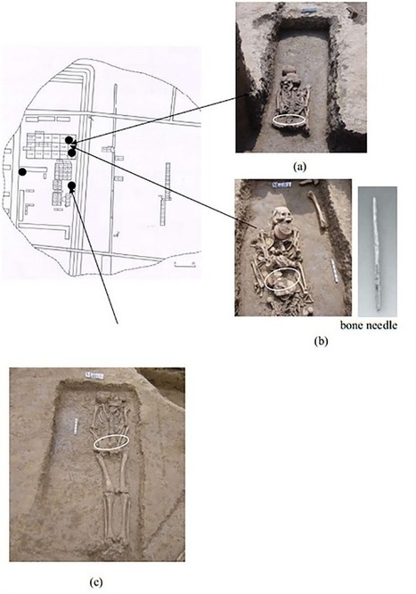 Prehistoric silk found in Henan | The Archaeology News Network | Centro de Estudios Artísticos Elba | Scoop.it