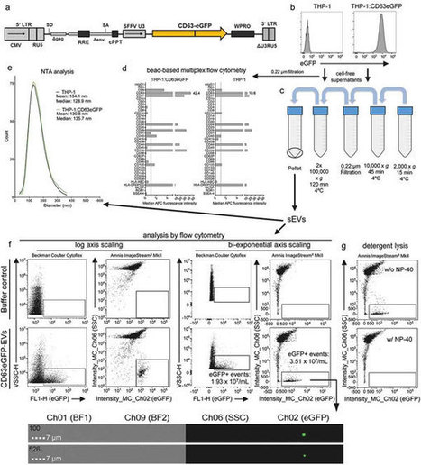 Optimisation of imaging flow cytometry for the