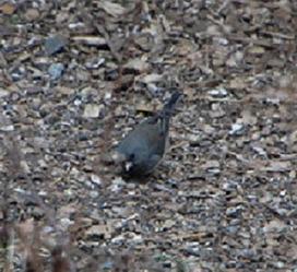 Winter Birding | Birds and Birding | Scoop.it