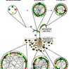 Plant-Microbe-Interactions