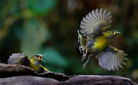 School Of Digital Photography: Photographing Birds in Flight – Master Focusing Technique Part II | Great Photographs | Scoop.it