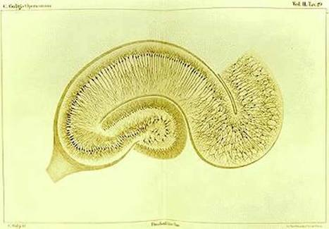 How the Hippocampus Influences Future Thinking | PLASTICITIES  « Between matter and form, between experience and consciousness, the active plasticity of the world » | Scoop.it