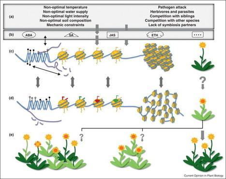 Curr. Op. in Plant Biology (2012):  Epigenetic responses to stress: triple defense? | Arabidopsis | Scoop.it