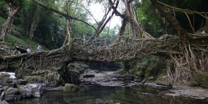 En Inde, la forêt est une mine d'or trompeuse | Bois, forêt, construction, bois énergie, ameublement et plus | Scoop.it