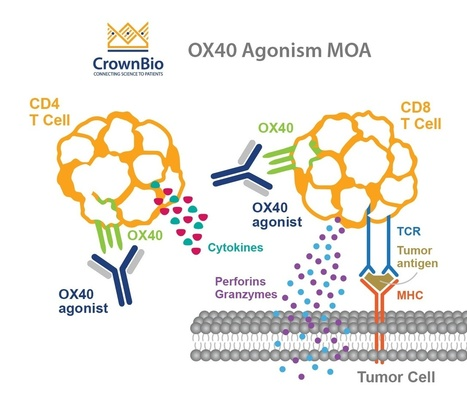 OX40 Agonists: Boosting Cancer Immunotherapy |