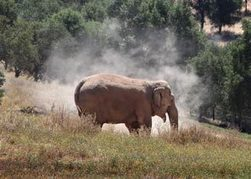 Elephant havens face zoo-industry backlash   Animals in captivity - Zoo, circus, marine park, etc..   Scoop.it
