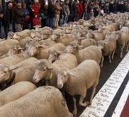 Médias: les moutons de Panurge | Divers 2.0. | Scoop.it