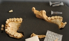 Neanderthals ate vegetables too (ScienceAlert) | Science and Other Wild Affairs | Scoop.it