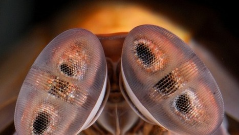 Shrimp's Eyes Inspire New Cancer-detecting Camera | Biomimicry | Scoop.it