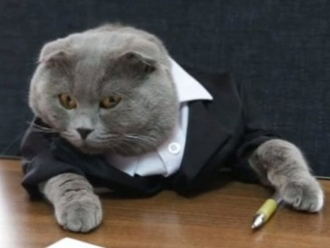 Cat Hired As Manager At Online Gifts Company   ♨ Family & Food ♨   Scoop.it