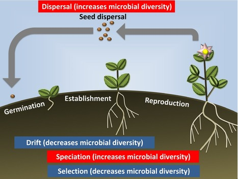 Giving back to the community: microbial mechanisms of plant–soil interactions | NetBiology | Scoop.it