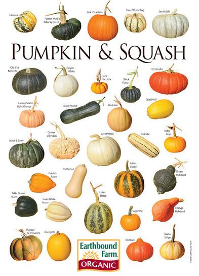 MyScaryBlog.com: Time to Plant Pumpkins | Halloween | Scoop.it