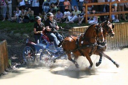 Attelages-magazine.com : Pau, Mondial puis Championnat du monde poneys | Couleurs d'Automne | Scoop.it