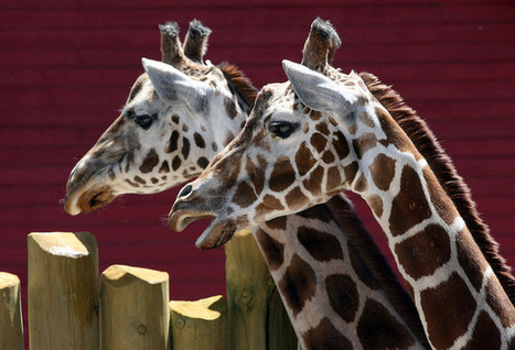 New mixed-species exhibit opens at Hogle Zoo - ksl.com   Museums and exhibits   Scoop.it