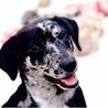 Dogs, Rescue dogs, animal welfare, pet adoption, pet toys, pet food