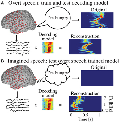 Method to reconstruct overt and covert speech | Science technology and reaserch | Scoop.it