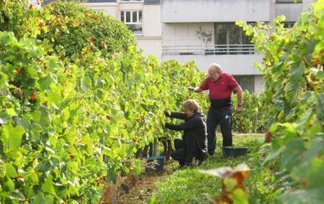 Suresnes : les vendanges sont de retour | Wine and the City - www.wineandthecity.fr | Scoop.it