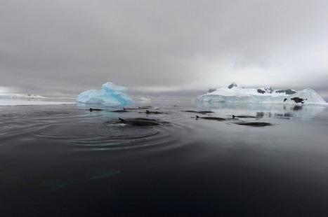 Mystery of Bizarre Duck-Like Ocean Sound Solved | Semiotic Adventures with Genetic Algorithms | Scoop.it