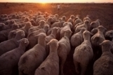 FAO -News Article:Major cuts of greenhouse gas emissions from livestock within reach | Animal Sciences | Scoop.it