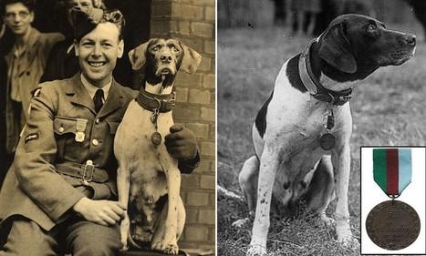 Judy the dog of war whose sixth sense saved hundreds of British lives | British Genealogy | Scoop.it