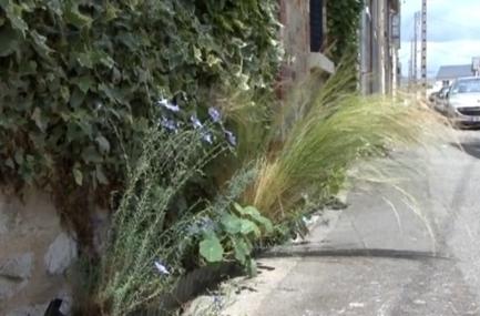 Les belles plantes (re)font le trottoir   biodiversité en milieu urbain   Scoop.it
