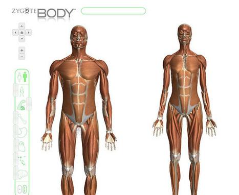 Anatomía humana interactiva | Educaci&oa...