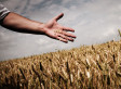 Feeding the World Sustainably: Agroecology vs. Industrial Agriculture   Annie Haven   Haven Brand   Scoop.it