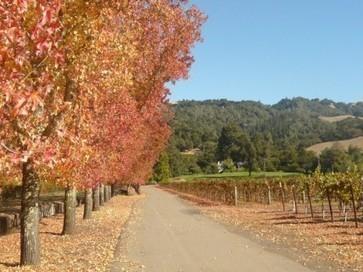 California 2012 'outstanding' | Autour du vin | Scoop.it