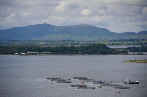 Scottish Aquaculture Innovation Centre - Scottish Salmon Producers' Organisation   Aquaculture Directory   Scoop.it