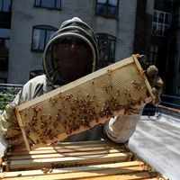 WNYC News - Two Years After Legalized Beekeeping, City May be Running Short on Forage | Bees and Honey | Scoop.it