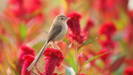 Flowers And Birds Wallpaper For Desktop And Mob