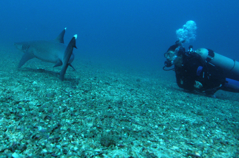 Guest Blogger: How I overcame my fear of Sharks | All about water, the oceans, environmental issues | Scoop.it