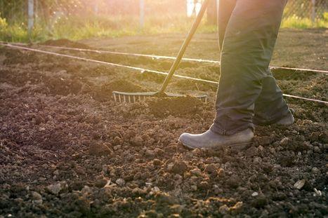 Jardin: idées et remèdes pour soigner la terre | DécoBricoJardin | Scoop.it