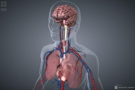 Une start up modélise le premier corps humain 100% interactif   PHARMARAMA   Scoop.it