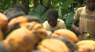 Watch Chocolate's Child Slaves Online | smh.tv | Geography Teaching | Scoop.it
