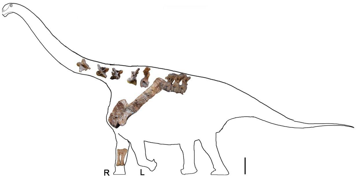 Un nuevo titanosaurio del Cretác...