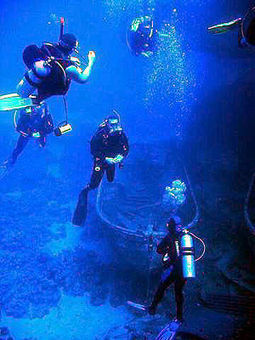 SCUBA SCOOP/latest dive stories: Don't Take Quickie Scuba Dive Courses! | All about water, the oceans, environmental issues | Scoop.it