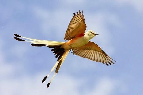 School Of Digital Photography: Photographing Birds in Flight – Master Focusing Technique | Great Photographs | Scoop.it