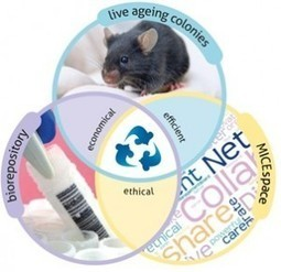 Collaborative effort to reduce animal use and share best practise in ageing research | NC3Rs blog | Alternatives and refinements to animal research | Scoop.it