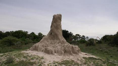 termitas\' in Pangea | Scoop.it