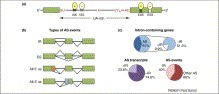 Alternative splicing in plants – coming of age | plant cell genetics | Scoop.it