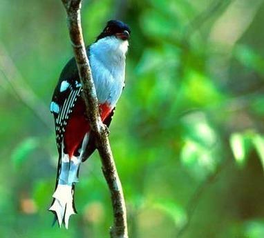 Vitaminas Halcón: Parque Nacional de Caguanes | Blog ... | Aprendiendo Botánica en la escuela | Scoop.it