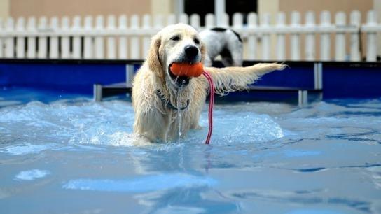 Comment protéger son chien des coups de chaleur ? - France 3 Normandie