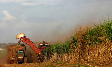 EU to limit production of biofuels from food crops | Sustainable Futures | Scoop.it